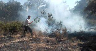 نواب و عمال البلدية ينقدون غابة والبان من حريق كاد يخلف كارثة