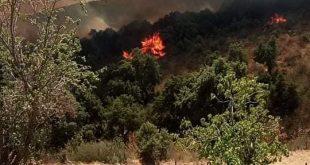 بلدية عين السبت / تم بعون الله تعالى إخماد الحريق الذي نشب بغابة الأربعاء